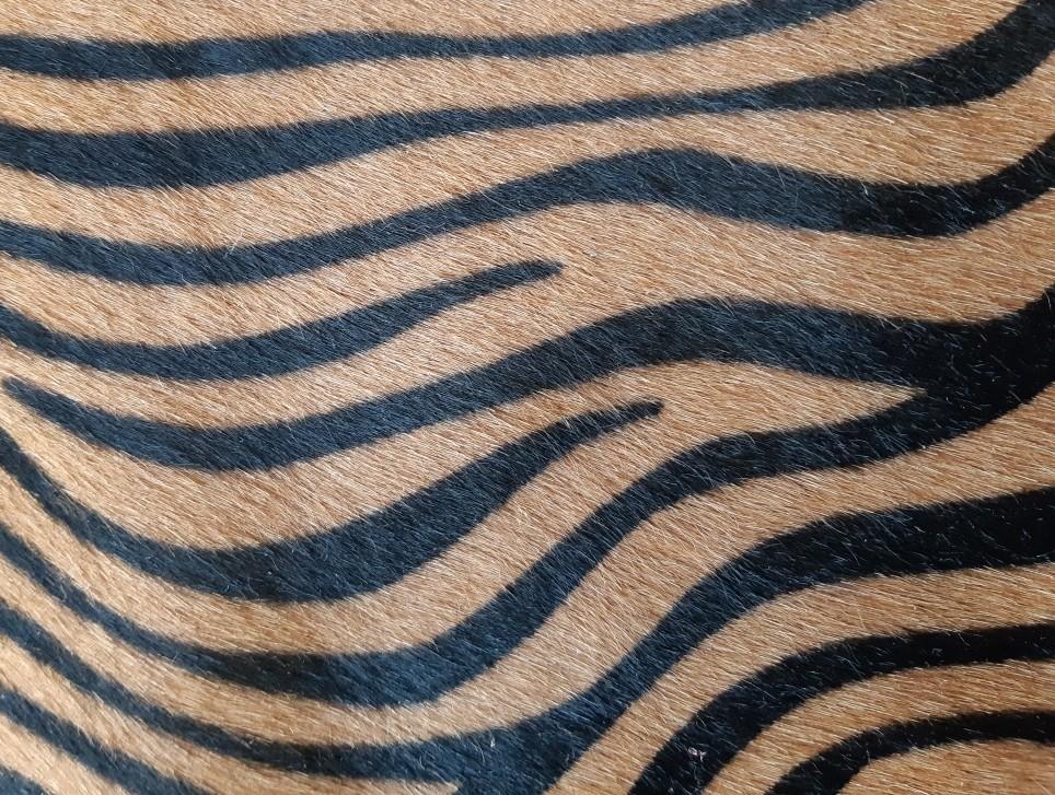 Zebra beige